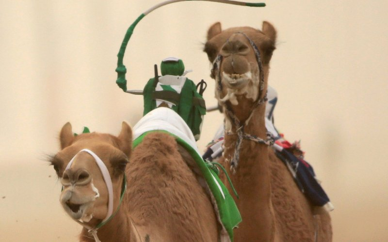 Robot jockeys replace children in Dubai camel races