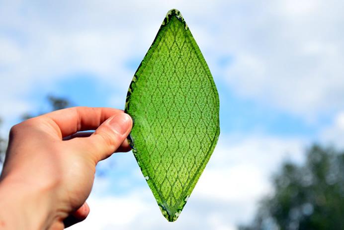 http://newlaunches.com/wp-content/uploads/2014/07/silk-leaf-1.jpg