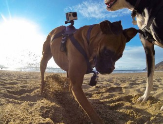GoPro Harness enables you to view the world through your dog's eyes