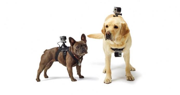 fetch-dog-harness-2-692x367