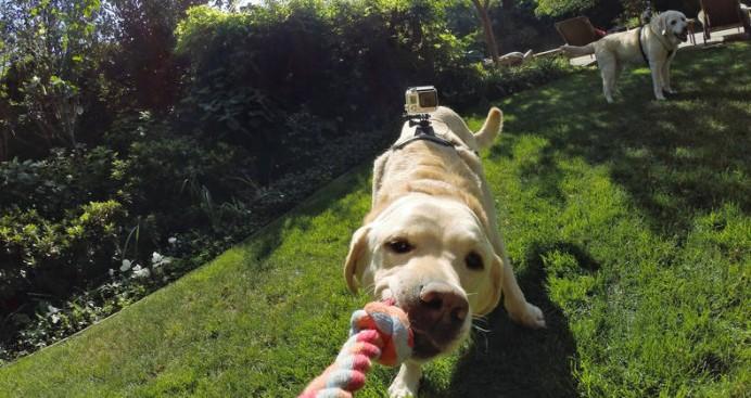 fetch-dog-harness-4-692x367