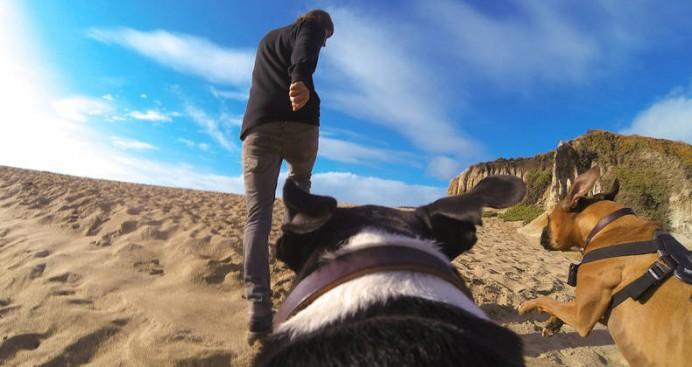 fetch-dog-harness-5-692x367