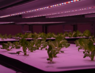 Green Crocs Factory in Japan uses Robots for Sorting Seedlings