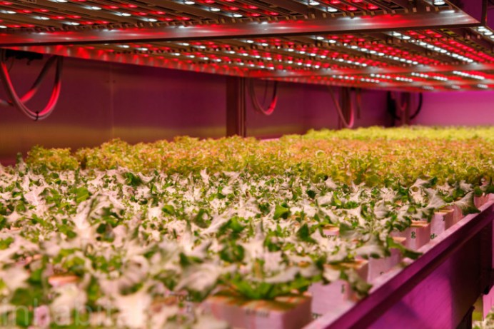 Philips-GrowWise-Indoor-Farm-4
